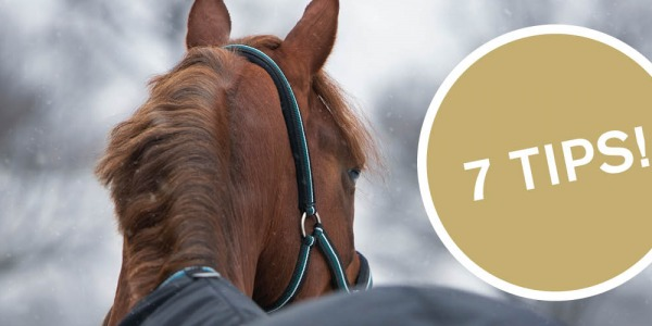 Taking care of your horse during the cold winter months